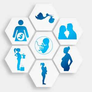pregnancy cycle and viral infections during pregnancy possible transfer